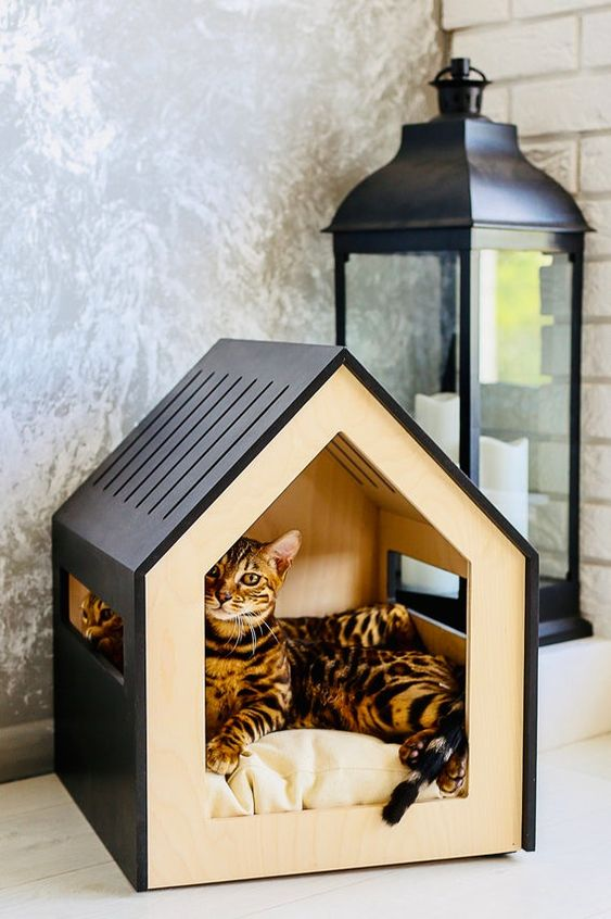 Modern dog and cat house